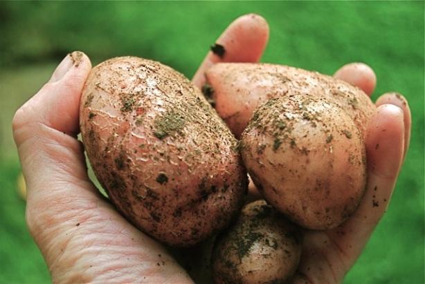 potatoes-for-dinner2